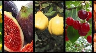 900 bin ton sebze ihraç edildi