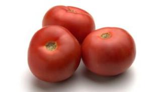 350 ton domates güveli çıktı