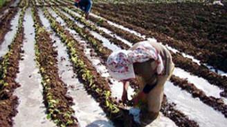 Sel mağduru çiftçinin kredi borcu ertelendi