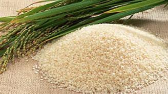 Pirinç üretimi arttı