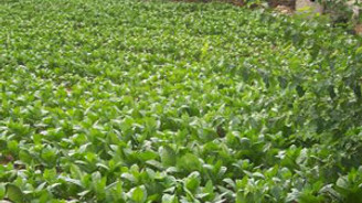 Philsa ekolojik tarımı destekliyor