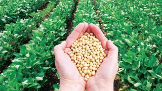Tohumunun 1 gramı 1 gram altından pahalı!