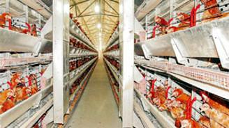 Rusya, Türkiye'ye konan beyaz et yasağını kaldırdı