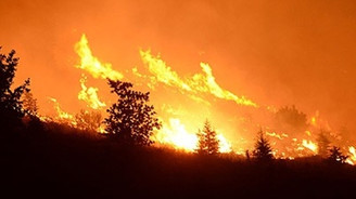 350 hektarlık orman kül oldu