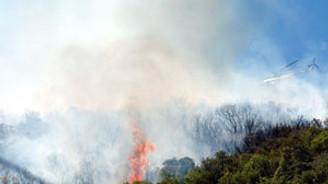 Heybeliada'da ormanlık alan yandı