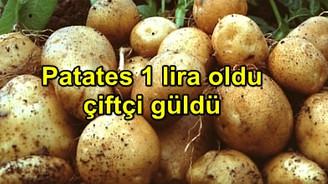 Patates 1 liraya fırladı, Nevşehir ve Niğde'de çiftçinin yüzü güldü