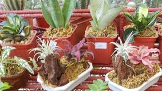 İhraç geliri en yüksek ürün: Canlı bitkiler