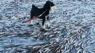 Balıklar suda dondu
