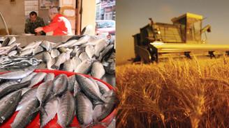 Tarım ve balıkçılık kredileri yüzde 11.5 arttı