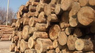 Orman ürünlerinde hedef 25 milyar dolar