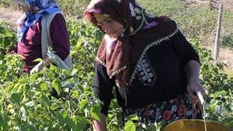 2 milyona yakın kadın çiftçiye eğitim verildi