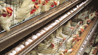 Türk beyaz et sektörü Rus pazarını 'fethediyor'