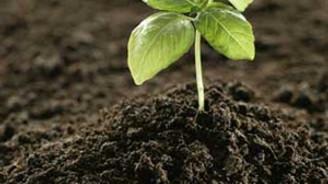 Buğdayda gübre ve gübrelemeye dikkat