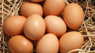 Yumurta üretimi 15 milyarı aştı