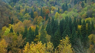 Barolar Birliği'nden 'Orman Yönetmeliğine' iptal davası