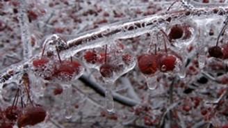 Ankara'da don ve yağışlardan 5 bin çiftçi zarar gördü