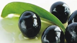Mersin'de zeytin rekoltesinde düşüş bekleniyor