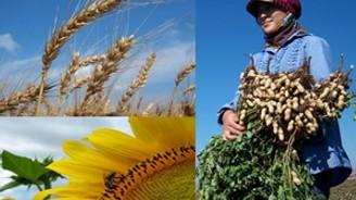 GAP çiftçisine Hollanda'dan destek