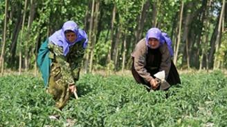Muhalefet mevsimlik işçiler için harekete geçti