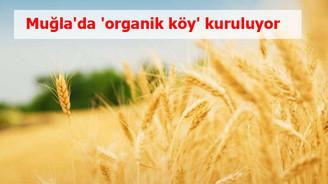 Muğla'da 'organik köy' kuruluyor