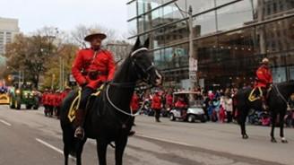 Polis köpekleri ve atlarına taş atmanın cezası 250 dolar
