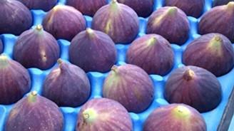 """""""Bursa siyahı"""" incirde tüm zamanların ihracat rekoru"""
