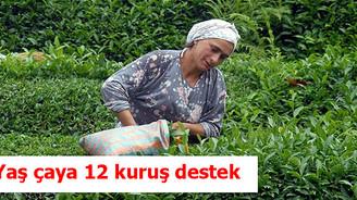 Yaş çay için kg başına 12 kuruş destek