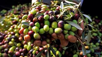 Marmarabirlik'ten yağlık zeytine esnek fiyat