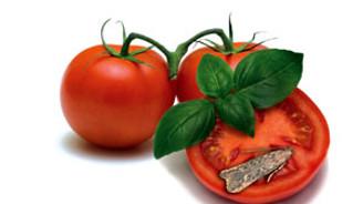 'Tuta kelebeği' domatesi vurdu