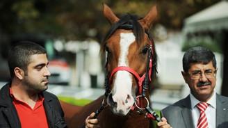 Bu atın fiyatı dudak uçuklattı