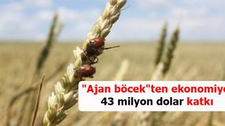 """""""Ajan böcek""""ten ekonomiye 43 milyon dolar katkı"""