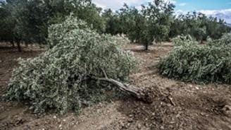 'Zeytin' nöbetindeki köylülere saldırı