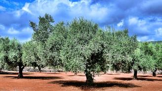 Ağaçları kurtaran çağrı merkezi
