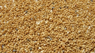 Gıda ithalatının üçte biri yağlı tohumdan