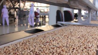 FİSKOBİRLİK, 2015 ürünü bin 500 ton fındık aldı