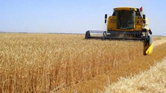 Tahıl üretimi yüzde 38 düştü