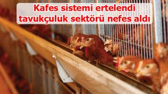 Tavukçuluk sektörü yeni yönetmelikle rahat nefes aldı