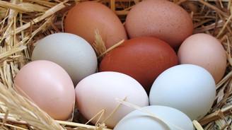 Tavuk yumurtası üretimi 1,4 milyar adede çıktı