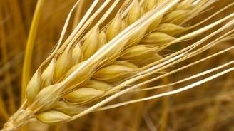 Buğdaya sürpriz fiyat: Tonu 862 lira