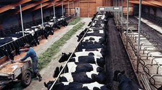 Van'a hayvancılık ve turizm önerisi