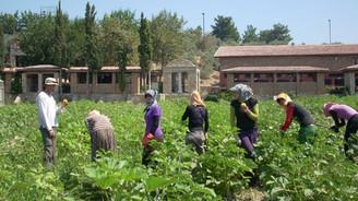 Aile çiftçiliği küresel gıda güvenliğinin sigortası