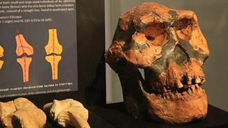 3,2 milyon yıllık insansı fosili: Lucy