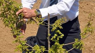 """""""Gizemli mantar""""ın ilk hasadı 2018'de"""