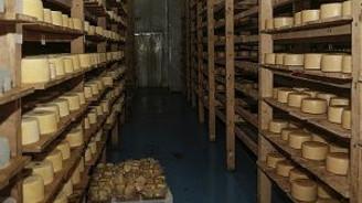 Bosna Hersek'in peynirleri, Türkiye pazarına hazırlanıyor