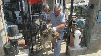 Evinin bahçesinde 40 köpek besliyor