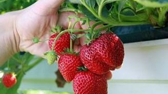 Topraksız tarım geliri 5'e katlayacak