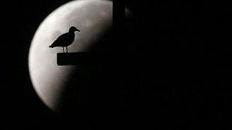 Ay'ların en süperi