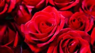 Çiçekçilerin Sevgililer Günü umudu