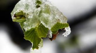 """Mart karı"""" fındık üreticilerini endişelendirdi"""