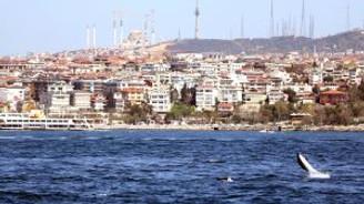 İstanbul Boğazı'nda yunus şov!
